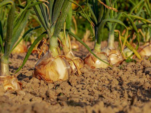 Écho du directeur général -Buen verano, queridos trabajadores extranjeros temporales agricolas