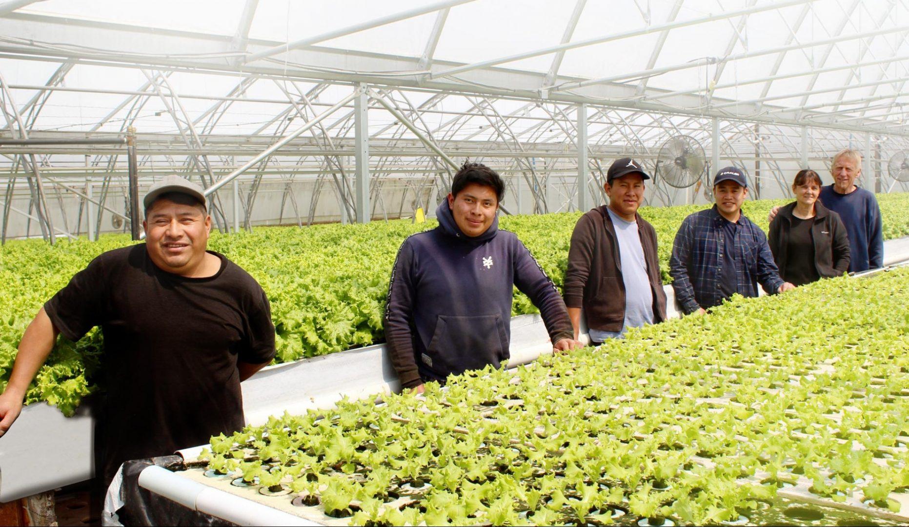 travailleurs étrangers temporaires du Guatemala aux Serres Lamarche de Compton